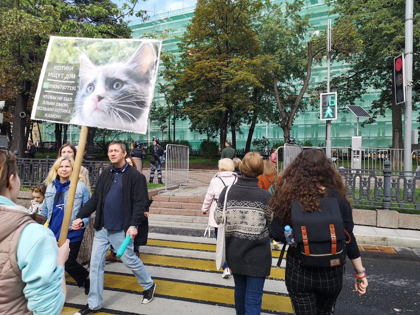 Суд оштрафовал москвичку на15 тысяч рублей заплакат опристройстве котят