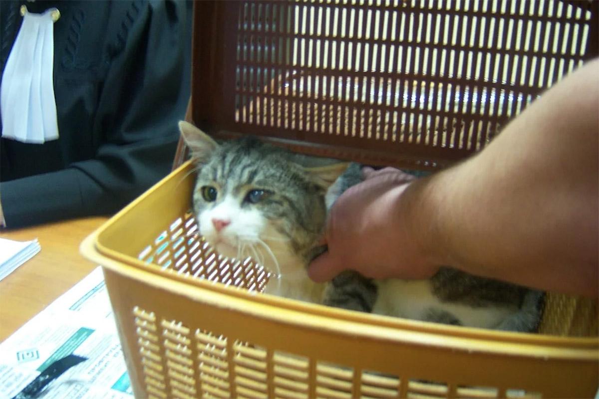 Коты взаконе: багаж, вещдоки иактивисты схвостами