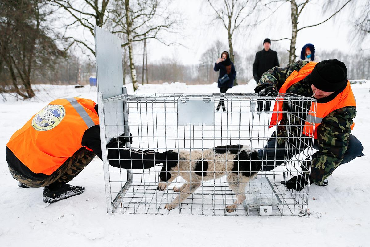 Собаки массово умирают отхолода впункте передержки вЯкутии. Что нетак сроссийскими приютами для животных?