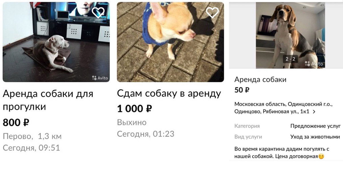 Собачка варенду. Москвичи пока неспешат брать животных изприютов, чтобы легально покинуть «самоизоляцию»